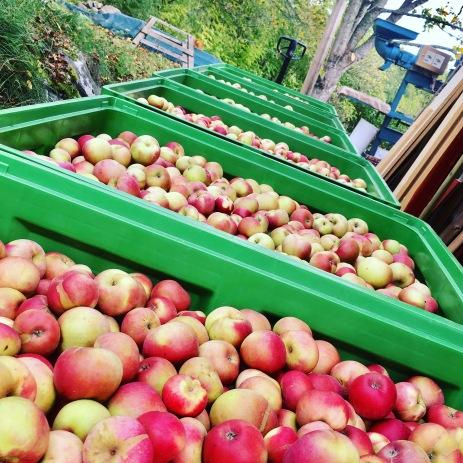 Äppelleverans IMG_3783